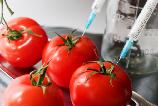 Genetically modified tomatoes are used for treating Alzheimer